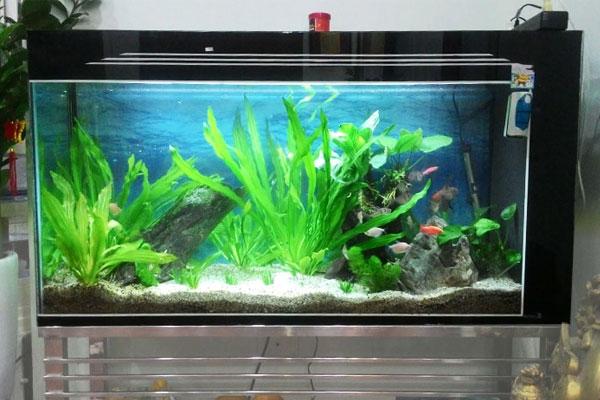 hướng dẫn chọn lựa máy bơm nước bể cá đúng cách hiệu quả