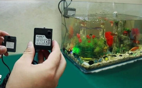 hướng dẫn chọn máy bơm bể cá đúng cách hiệu quả