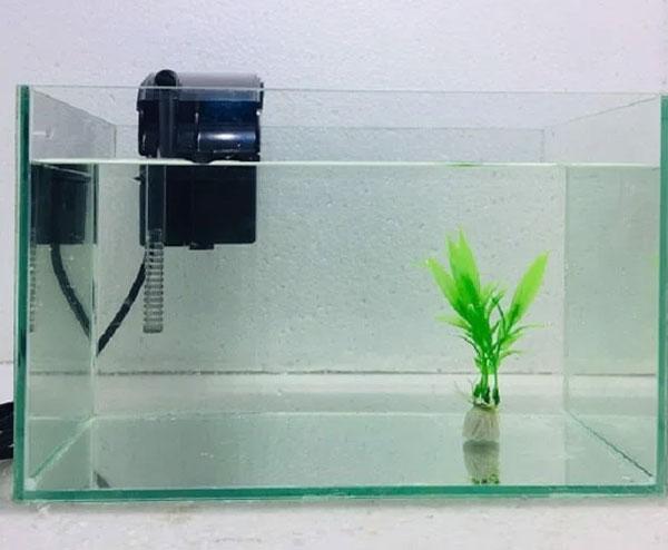 hướng dẫn chọn lựa máy bơm bể cá đúng cách